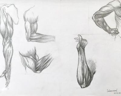 Anatómia II